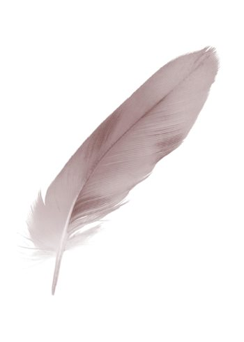 violet mauve soft feather