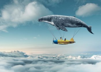 flying dream with whale